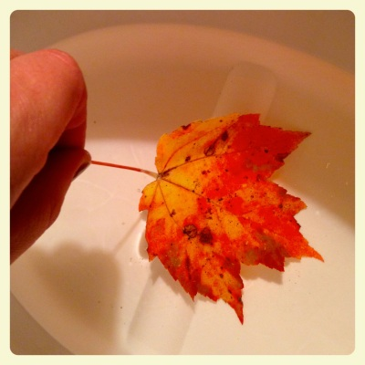 OF leaf dip