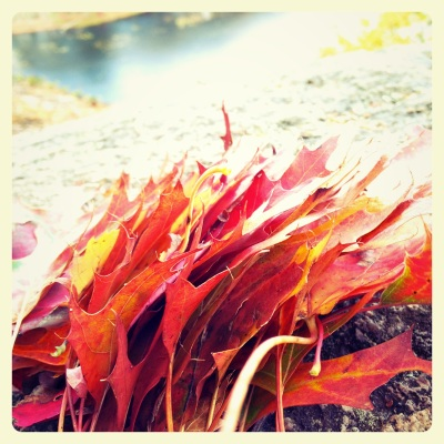 OF leaf pile