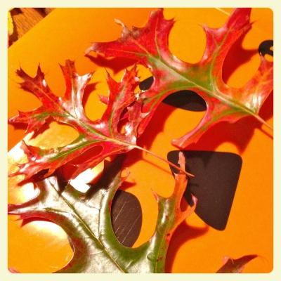 OF leaves1